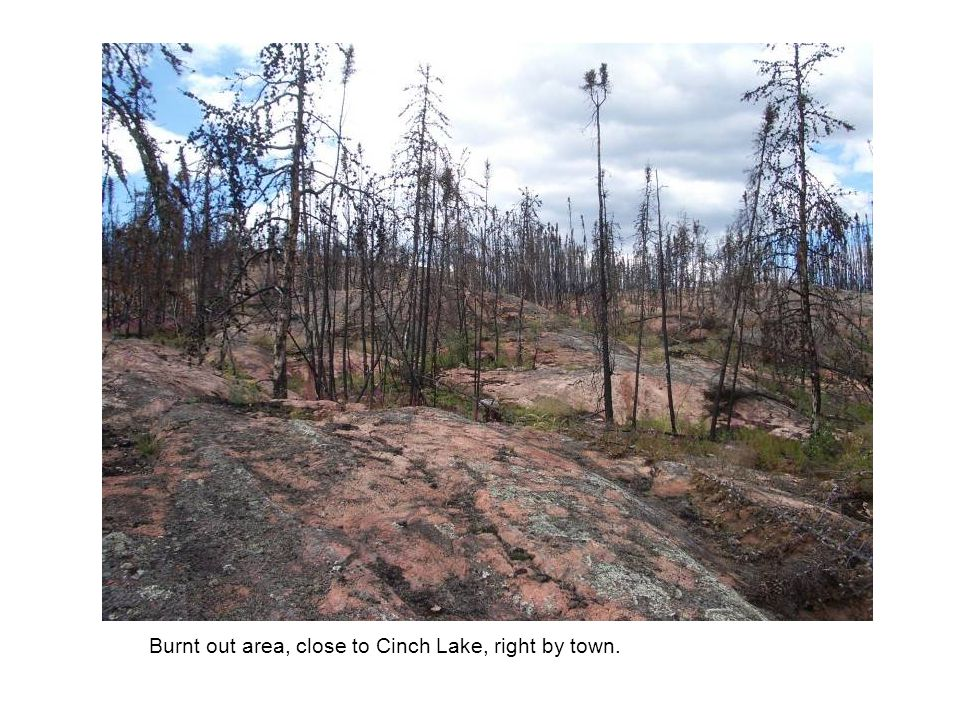 Burnt out area, close to Cinch Lake, right by town.