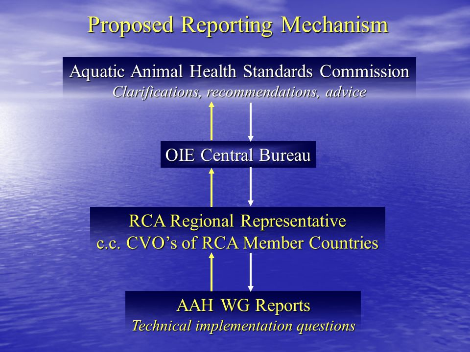 Proposed Reporting Mechanism AAH WG Reports Technical implementation questions RCA Regional Representative c.c.