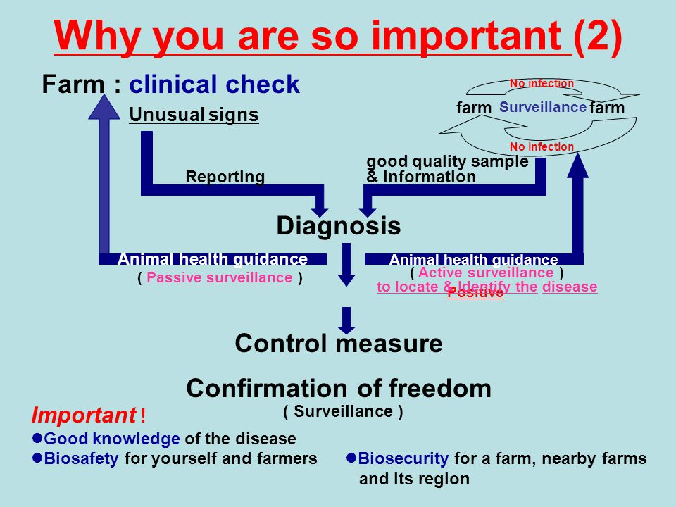 Why you are so important (2) Farm : clinical check Unusual signs Diagnosis Positive Control measure Confirmation of freedom ( Surveillance ) Surveillance farm Biosecurity for a farm, nearby farms and its region No infection Biosafety for yourself and farmers Important .