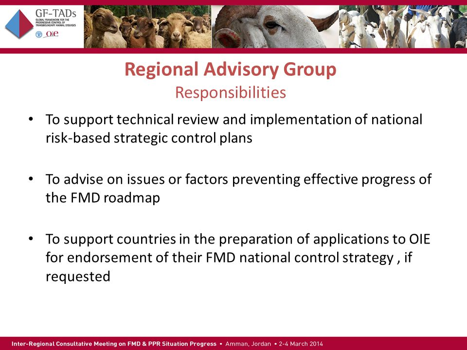 Regional Advisory Group Responsibilities To support technical review and implementation of national risk-based strategic control plans To advise on issues or factors preventing effective progress of the FMD roadmap To support countries in the preparation of applications to OIE for endorsement of their FMD national control strategy, if requested
