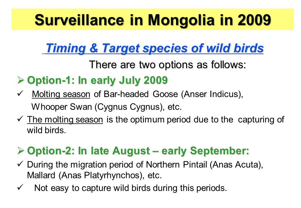 Timing & Target species of wild birds There are two options as follows: There are two options as follows:  Option-1: In early July 2009 Molting season of Bar-headed Goose (Anser Indicus), Whooper Swan (Cygnus Cygnus), etc.