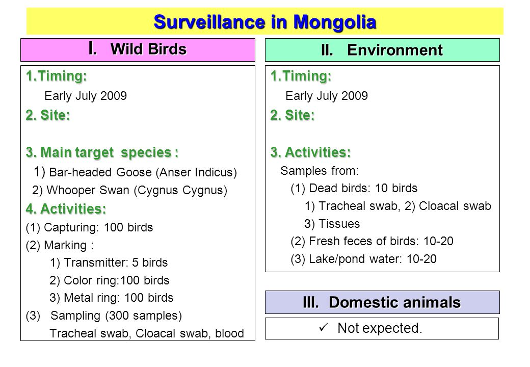 Surveillance in Mongolia I. Wild Birds II. Environment 1.Timing: Early July 2009 2.