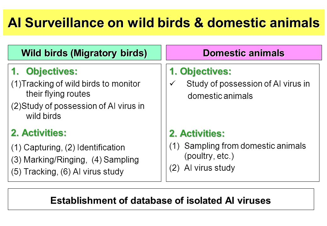 AI Surveillance on wild birds & domestic animals Wild birds (Migratory birds) 1.Objectives: (1)Tracking of wild birds to monitor their flying routes (2)Study of possession of AI virus in wild birds 2.