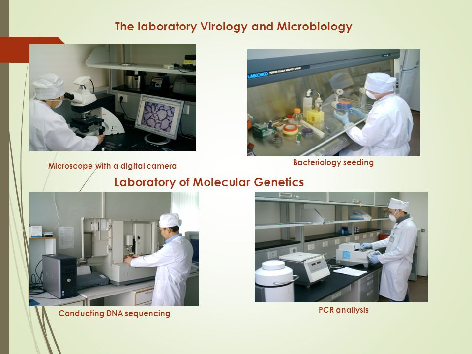 Microscope with a digital camera The laboratory Virology and Microbiology Bacteriology seeding Conducting DNA sequencing PCR analiysis Laboratory of Molecular Genetics