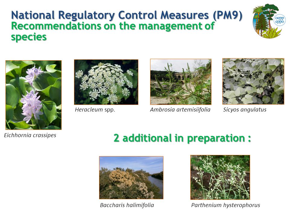 National Regulatory Control Measures (PM9) Recommendations on the management of species Sicyos angulatus Eichhornia crassipes Heracleum spp.
