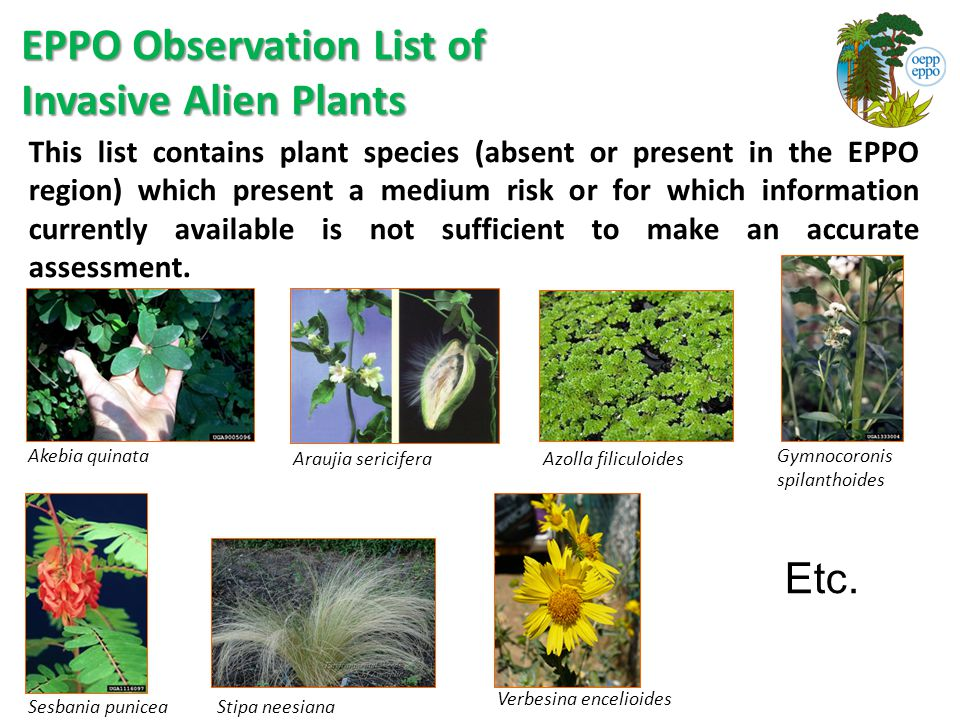 EPPO Observation List of Invasive Alien Plants This list contains plant species (absent or present in the EPPO region) which present a medium risk or for which information currently available is not sufficient to make an accurate assessment.