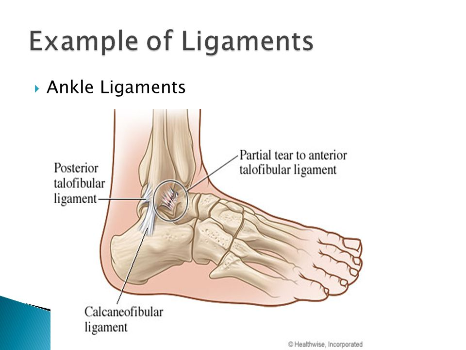  Ankle Ligaments