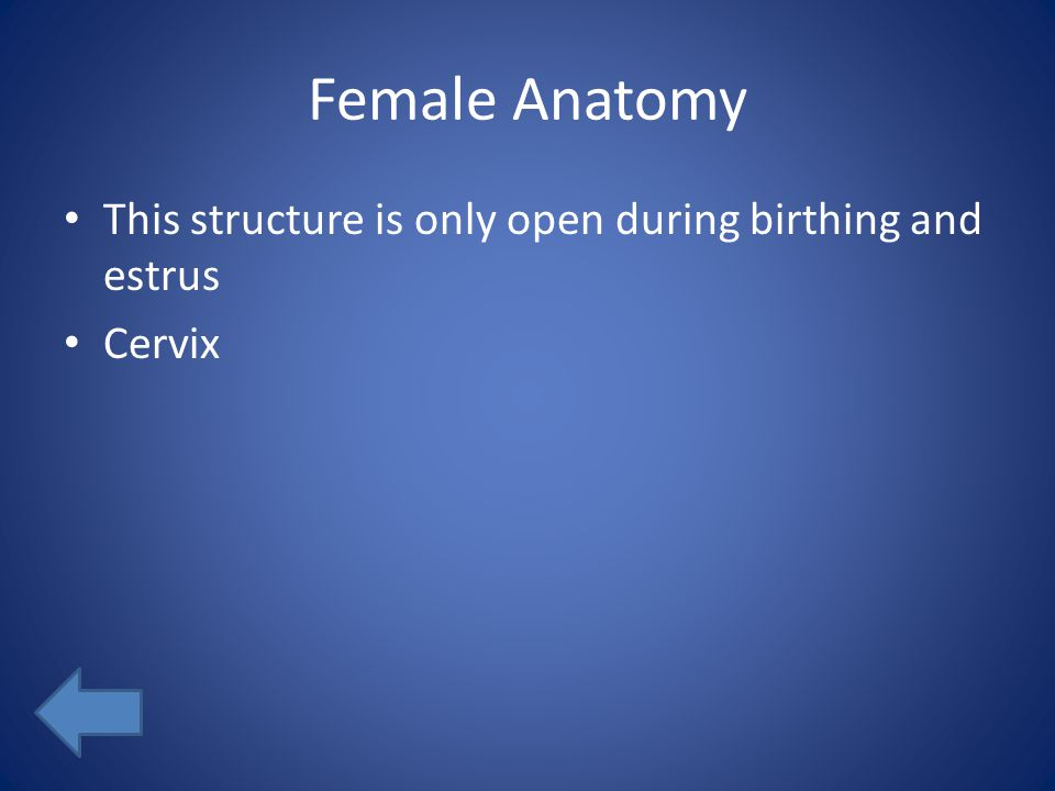 Female Anatomy This structure is only open during birthing and estrus Cervix