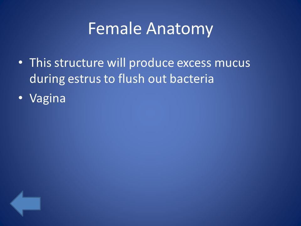 Female Anatomy This structure will produce excess mucus during estrus to flush out bacteria Vagina