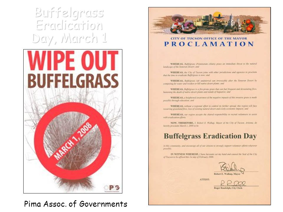 BuffelgrassEradication Day, March 1 Pima Assoc. of Governments