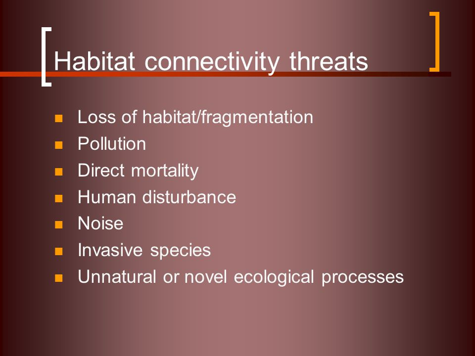Habitat connectivity threats Loss of habitat/fragmentation Pollution Direct mortality Human disturbance Noise Invasive species Unnatural or novel ecological processes