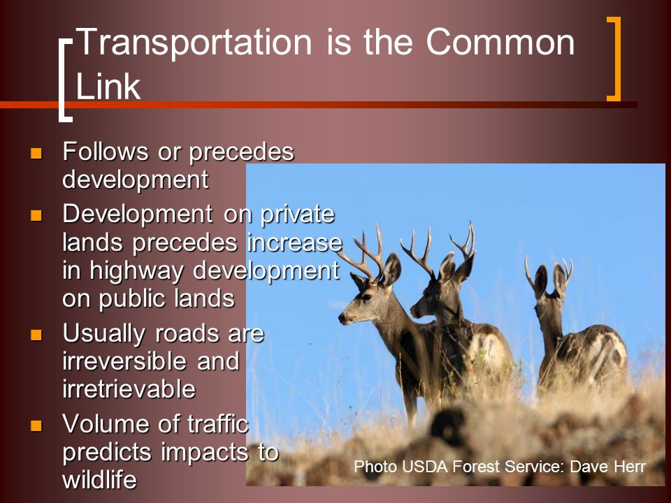 Transportation is the Common Link Follows or precedes development Follows or precedes development Development on private lands precedes increase in highway development on public lands Development on private lands precedes increase in highway development on public lands Usually roads are irreversible and irretrievable Usually roads are irreversible and irretrievable Volume of traffic predicts impacts to wildlife Volume of traffic predicts impacts to wildlife Photo USDA Forest Service: Dave Herr