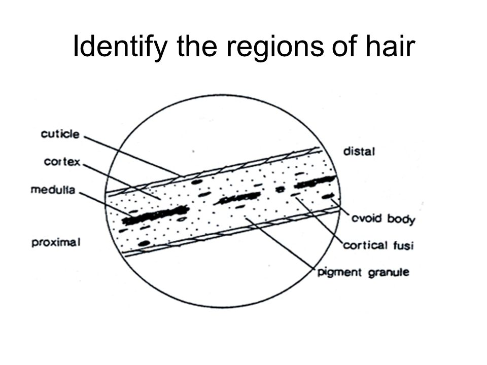 Identify the regions of hair