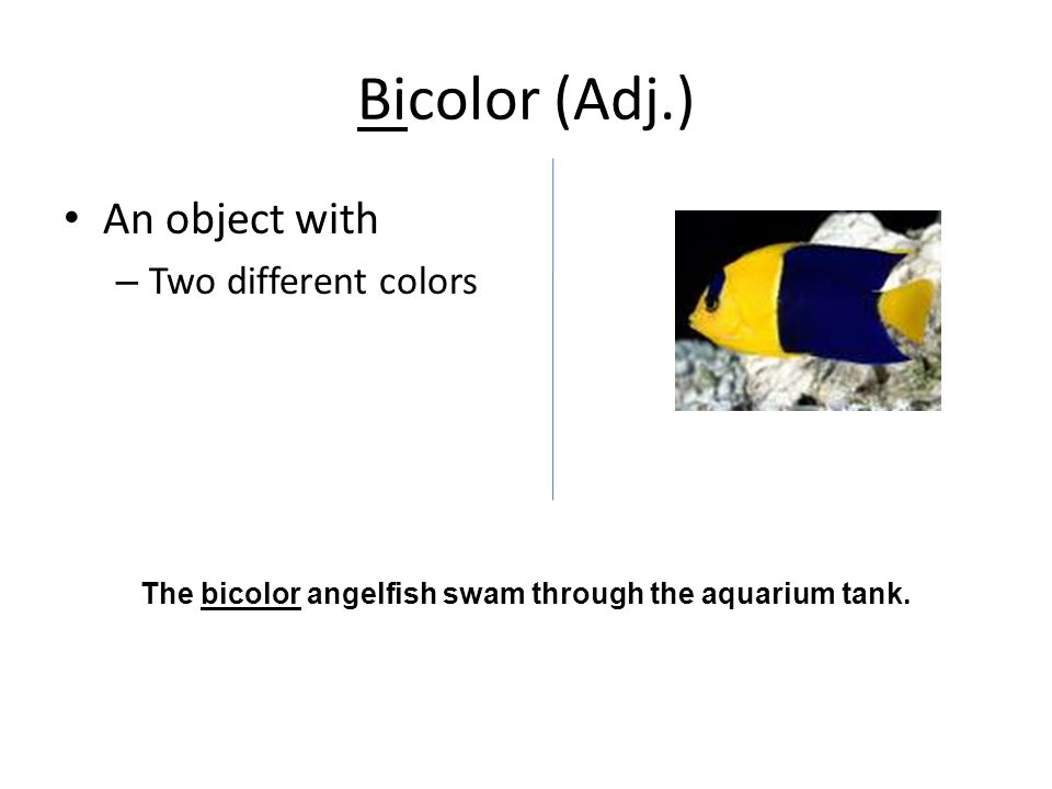 Bicolor (Adj.) An object with – Two different colors The bicolor angelfish swam through the aquarium tank.