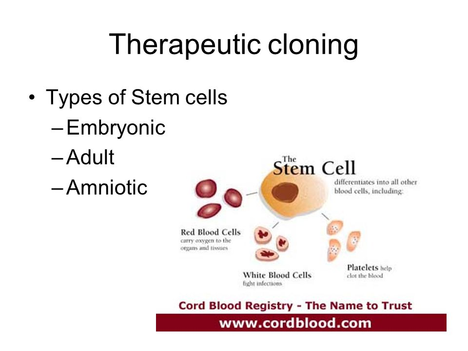 Therapeutic cloning Types of Stem cells –Embryonic –Adult –Amniotic