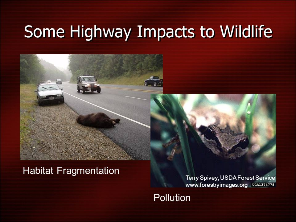 Some Highway Impacts to Wildlife Habitat Fragmentation Pollution Terry Spivey, USDA Forest Service www.forestryimages.org
