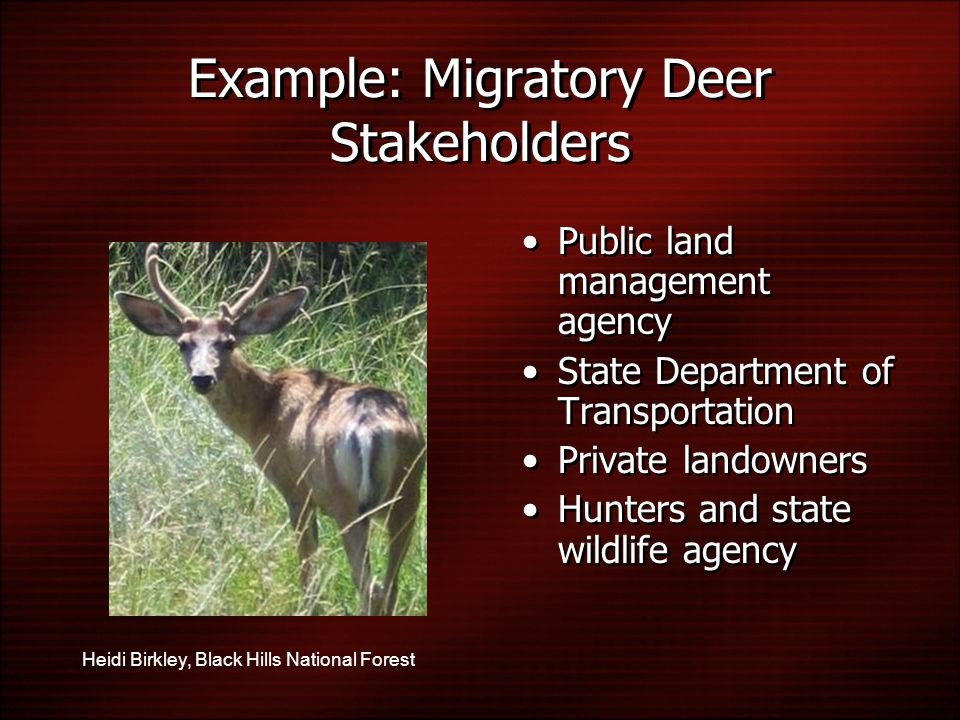 Public land management agency State Department of Transportation Private landowners Hunters and state wildlife agency Public land management agency State Department of Transportation Private landowners Hunters and state wildlife agency Heidi Birkley, Black Hills National Forest Example: Migratory Deer Stakeholders