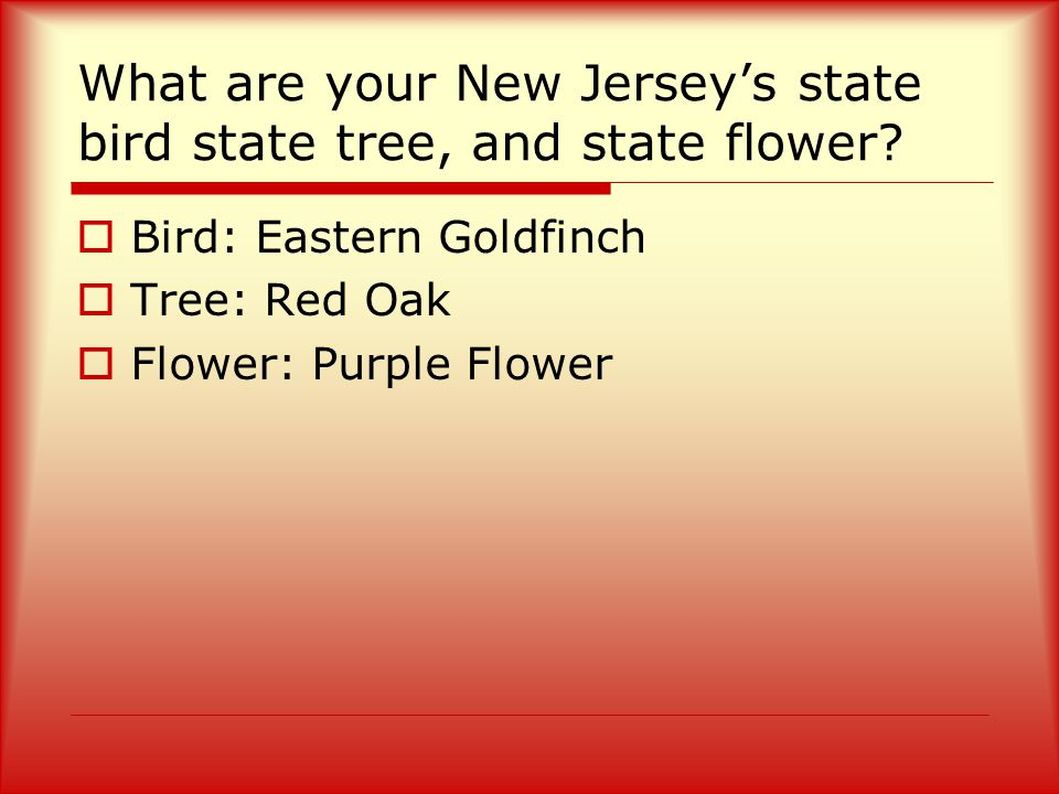 What are your New Jersey's state bird state tree, and state flower.