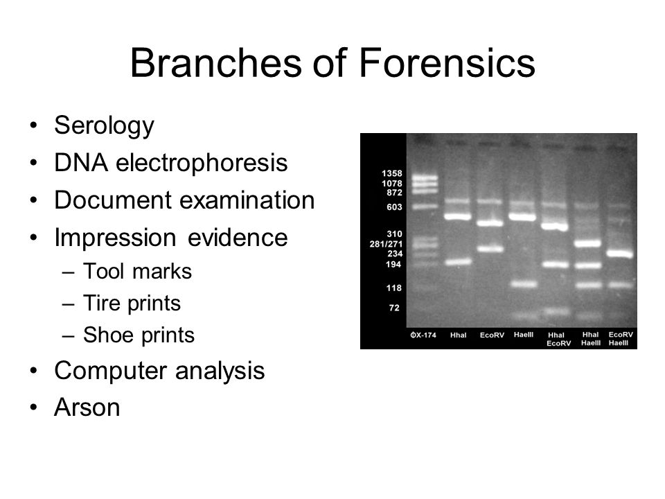 Branches of Forensics Serology DNA electrophoresis Document examination Impression evidence –Tool marks –Tire prints –Shoe prints Computer analysis Arson