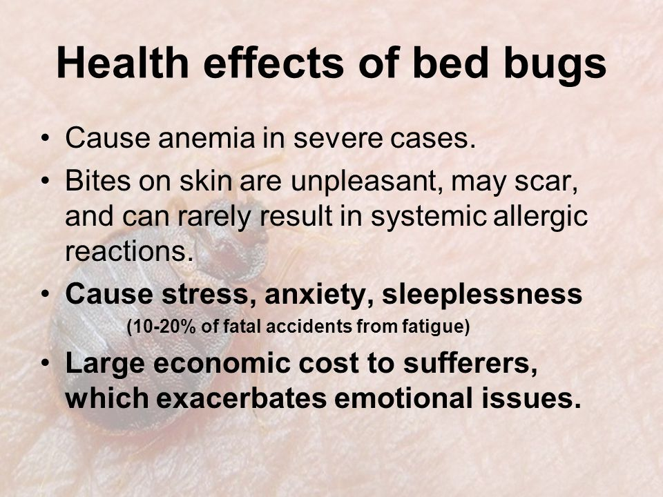 Health effects of bed bugs Cause anemia in severe cases.