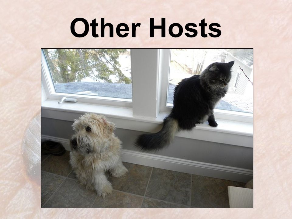 Other Hosts