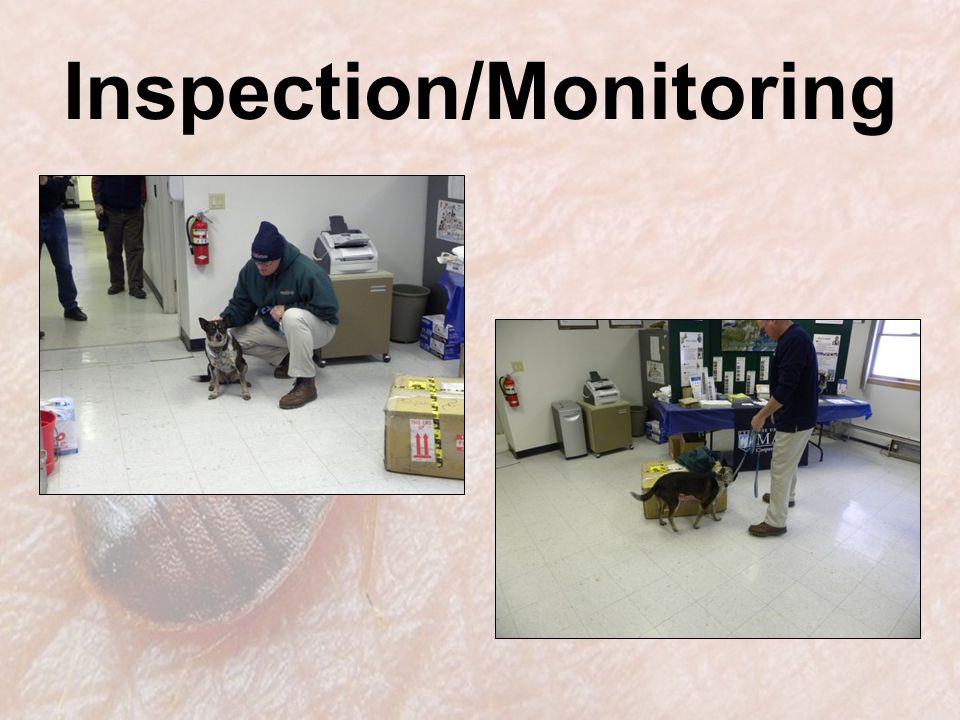 Inspection/Monitoring