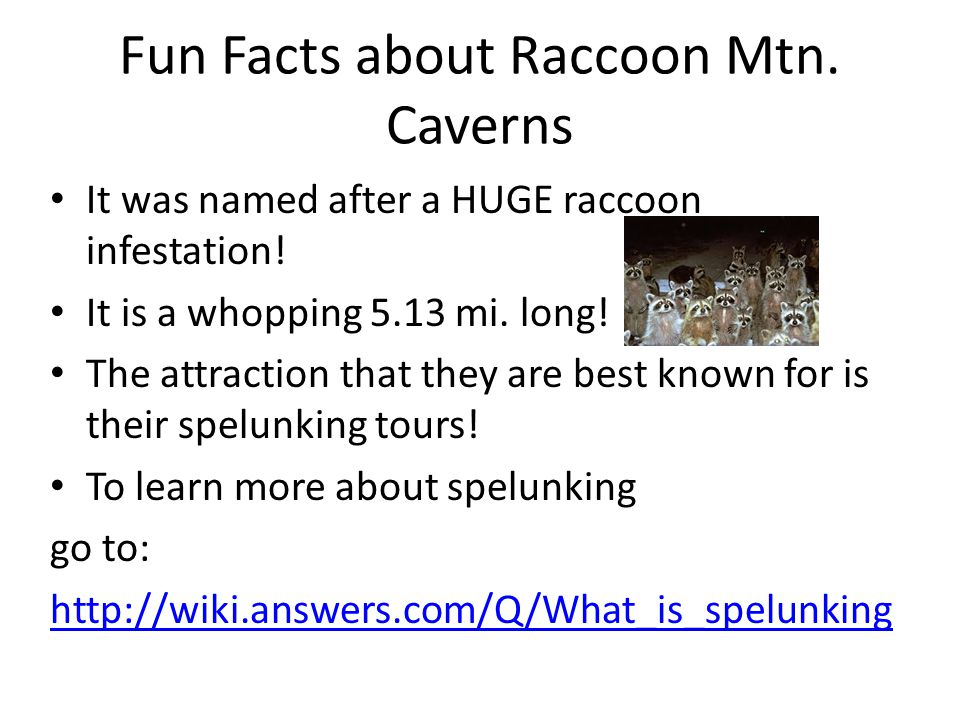 Fun Facts about Raccoon Mtn. Caverns It was named after a HUGE raccoon infestation.