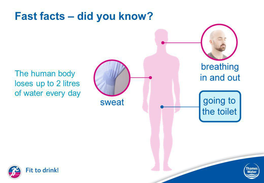 Fast facts – did you know The human body loses up to 2 litres of water every day