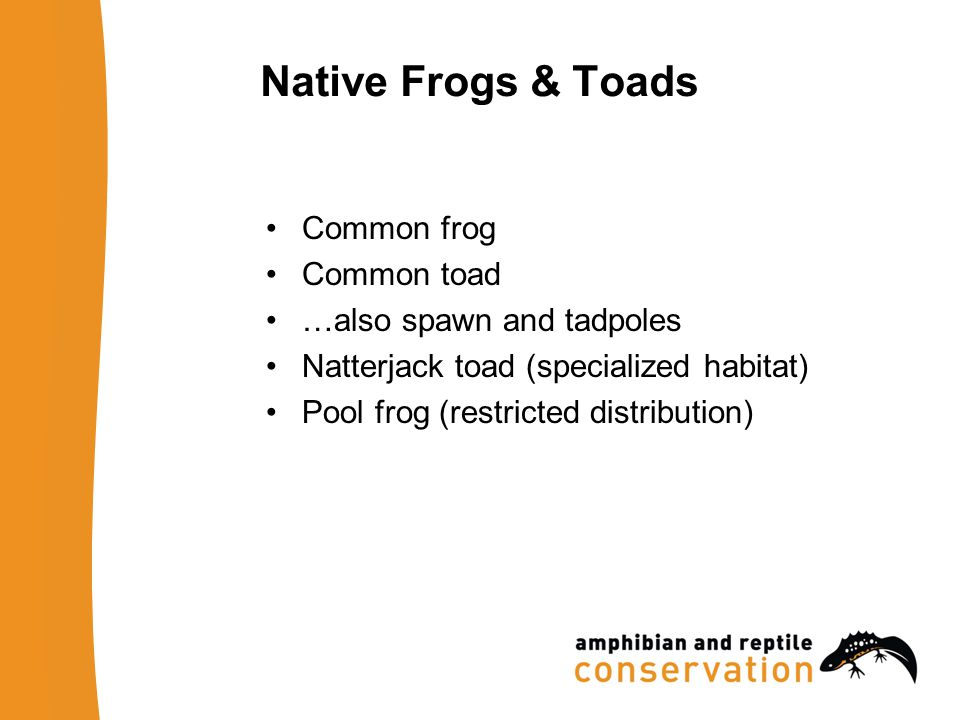 Native Frogs & Toads Common frog Common toad …also spawn and tadpoles Natterjack toad (specialized habitat) Pool frog (restricted distribution)