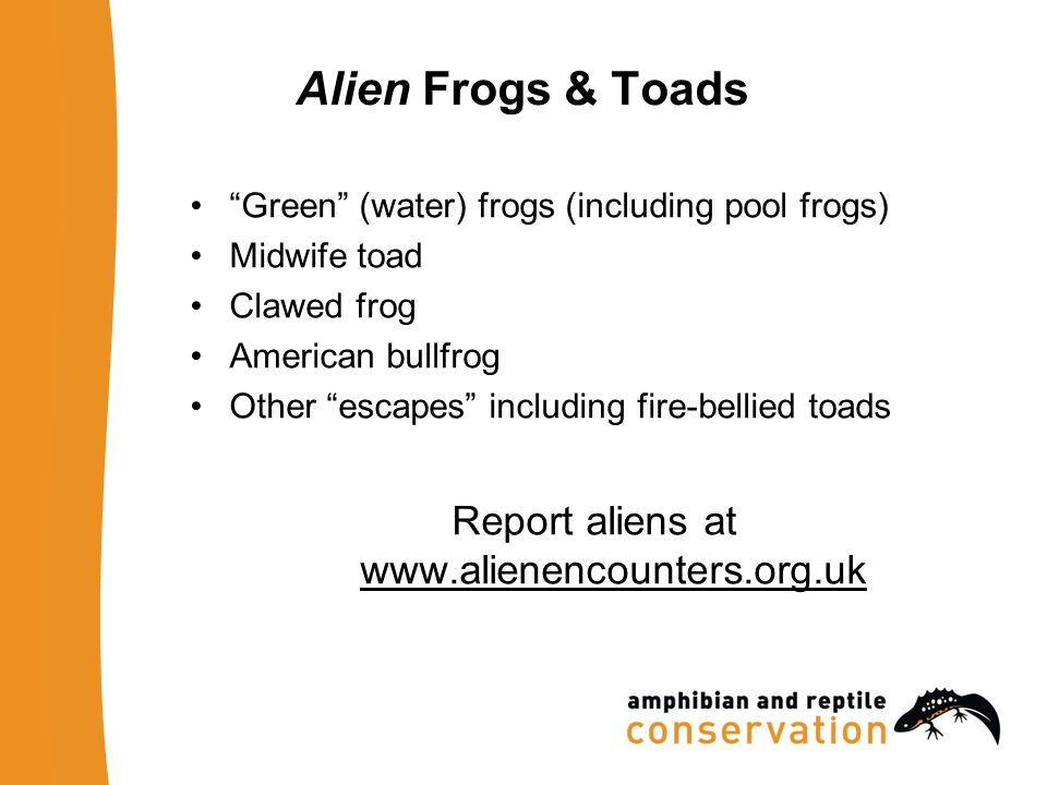 Alien Frogs & Toads Green (water) frogs (including pool frogs) Midwife toad Clawed frog American bullfrog Other escapes including fire-bellied toads Report aliens at www.alienencounters.org.uk