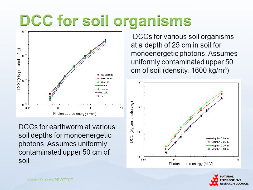 www.ceh.ac.uk/PROTECT DCCs for earthworm at various soil depths for monoenergetic photons.