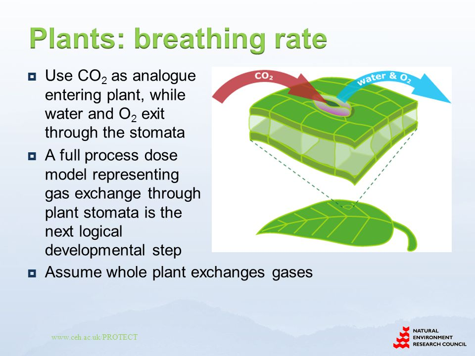 www.ceh.ac.uk/PROTECT  Use CO 2 as analogue entering plant, while water and O 2 exit through the stomata  A full process dose model representing gas exchange through plant stomata is the next logical developmental step  Assume whole plant exchanges gases