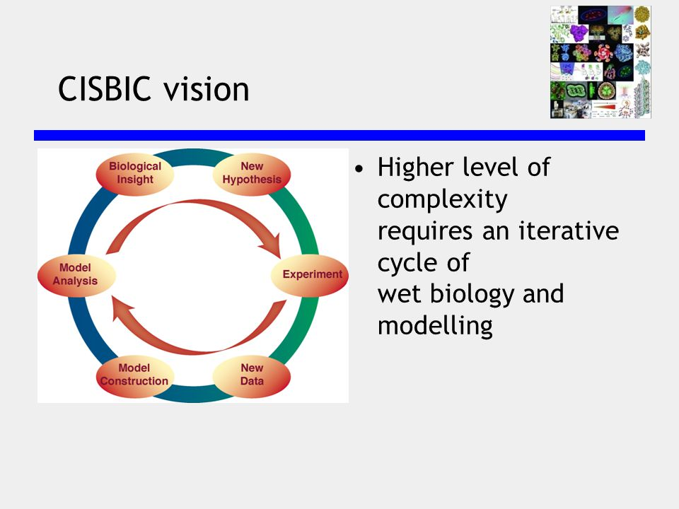CISBIC vision Higher level of complexity requires an iterative cycle of wet biology and modelling