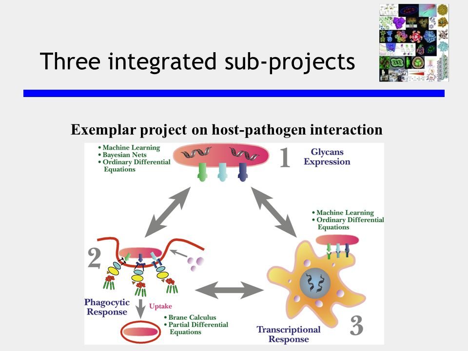 Three integrated sub-projects Exemplar project on host-pathogen interaction