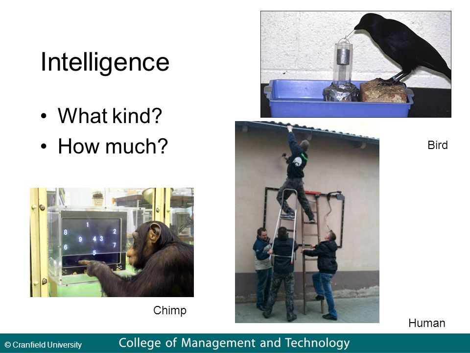 © Cranfield University Intelligence What kind How much Bird Chimp Human