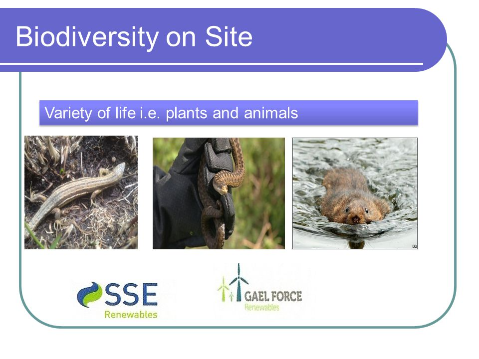 Biodiversity on Site Variety of life i.e. plants and animals
