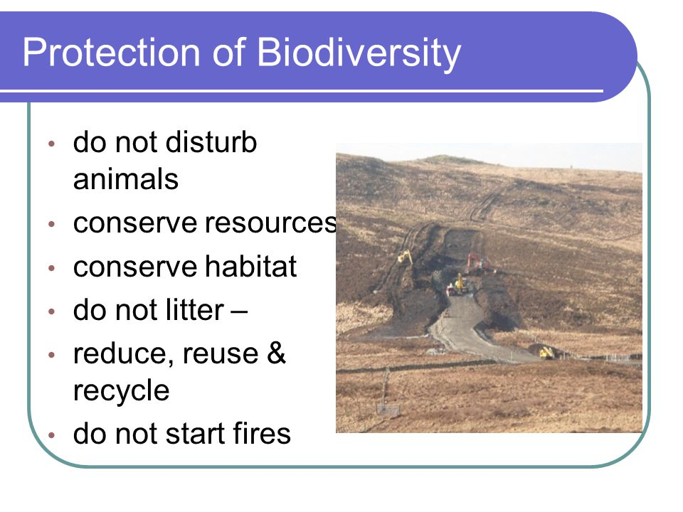 Protection of Biodiversity do not disturb animals conserve resources conserve habitat do not litter – reduce, reuse & recycle do not start fires