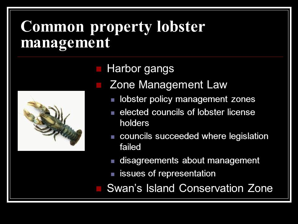 Common property lobster management Harbor gangs Zone Management Law lobster policy management zones elected councils of lobster license holders councils succeeded where legislation failed disagreements about management issues of representation Swan's Island Conservation Zone