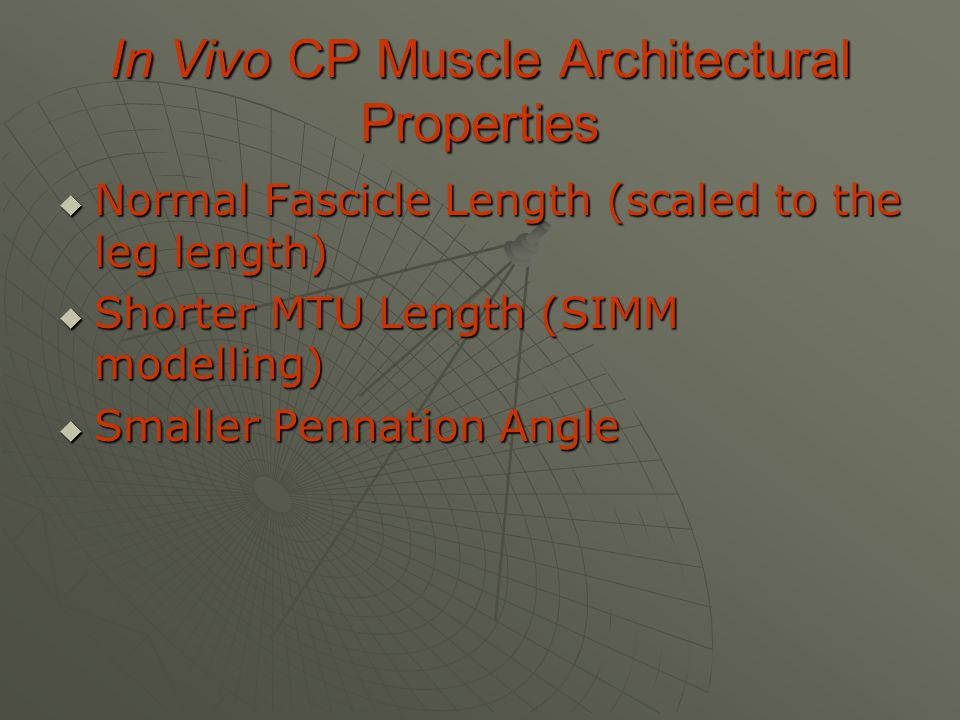 In Vivo CP Muscle Architectural Properties  Normal Fascicle Length (scaled to the leg length)  Shorter MTU Length (SIMM modelling)  Smaller Pennation Angle