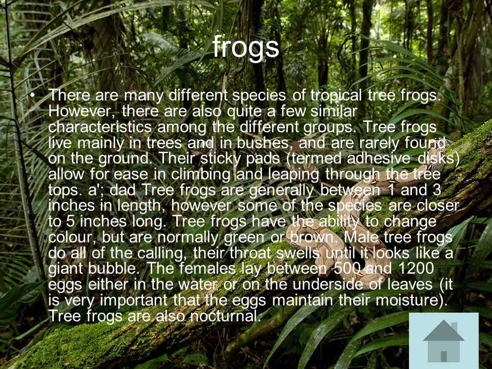 frogs There are many different species of tropical tree frogs.