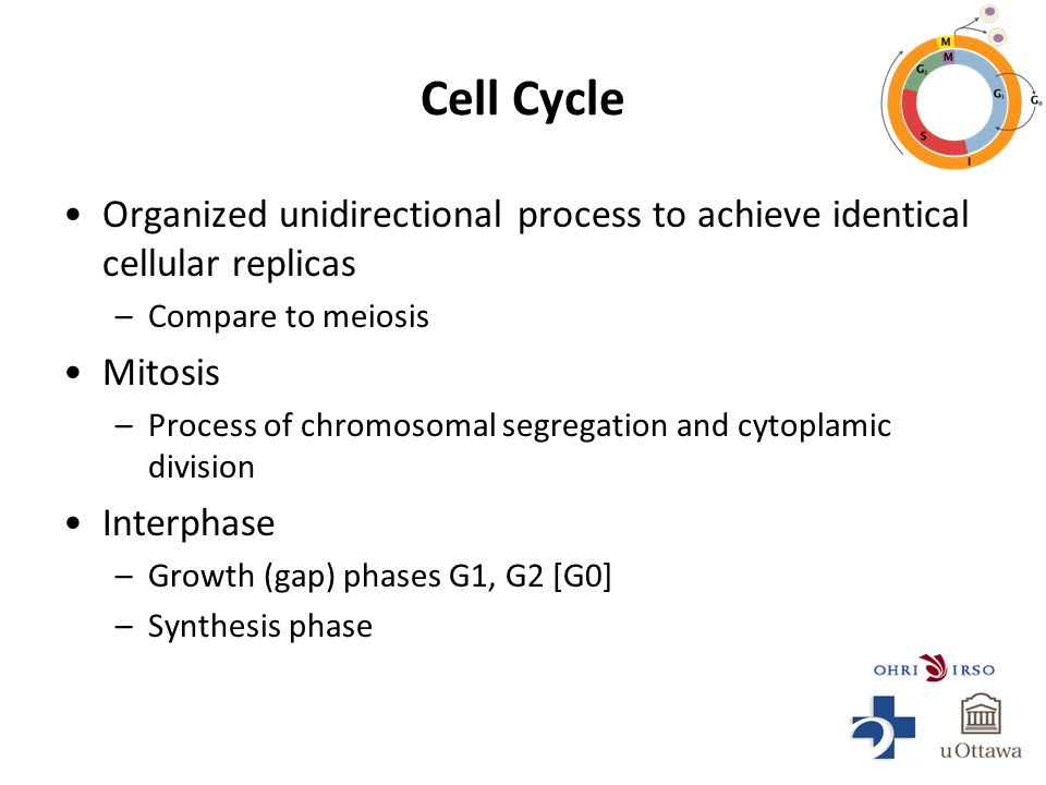 Cell Cycle Organized unidirectional process to achieve identical cellular replicas –Compare to meiosis Mitosis –Process of chromosomal segregation and cytoplamic division Interphase –Growth (gap) phases G1, G2 [G0] –Synthesis phase