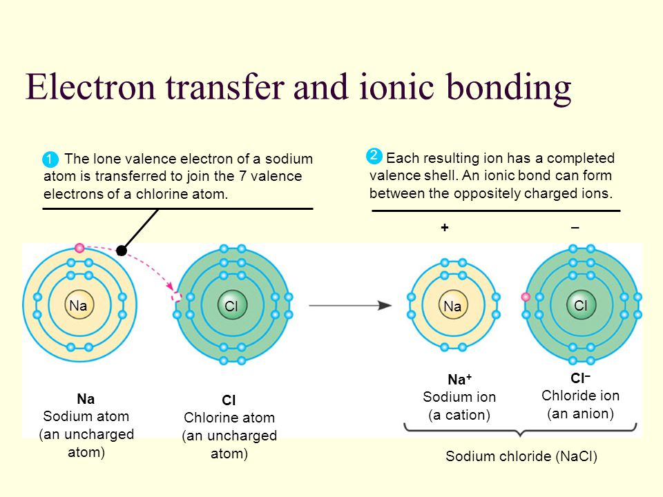 Electron transfer and ionic bonding Cl – Chloride ion (an anion) – The lone valence electron of a sodium atom is transferred to join the 7 valence electrons of a chlorine atom.