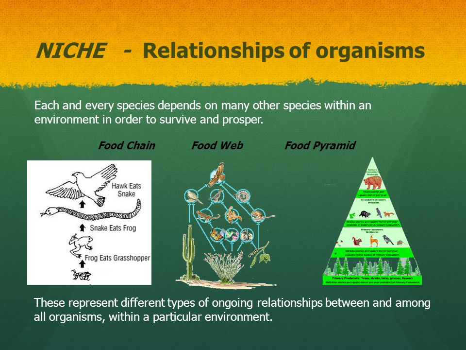 Niche A niche describes the interrelationships of a species or population in an ecosystem.