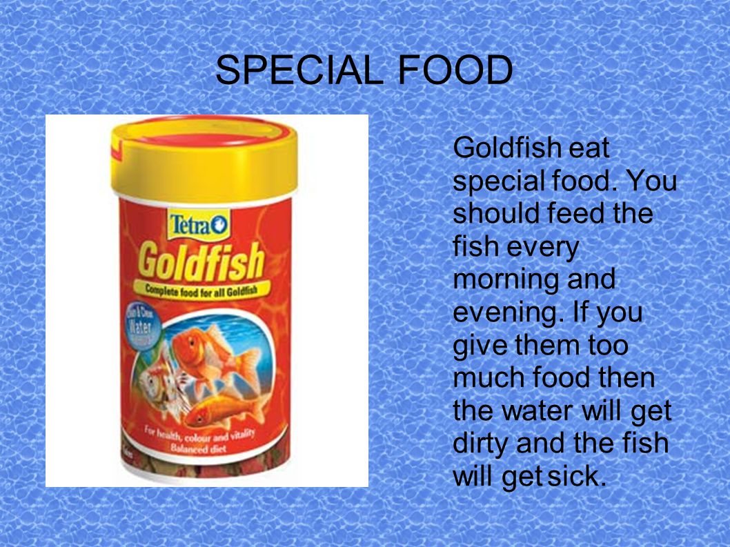 SPECIAL FOOD Goldfish eat special food. You should feed the fish every morning and evening.