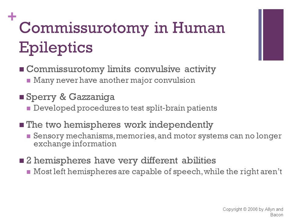 + Copyright © 2006 by Allyn and Bacon Commissurotomy in Human Epileptics Commissurotomy limits convulsive activity Many never have another major convulsion Sperry & Gazzaniga Developed procedures to test split-brain patients The two hemispheres work independently Sensory mechanisms, memories, and motor systems can no longer exchange information 2 hemispheres have very different abilities Most left hemispheres are capable of speech, while the right aren't