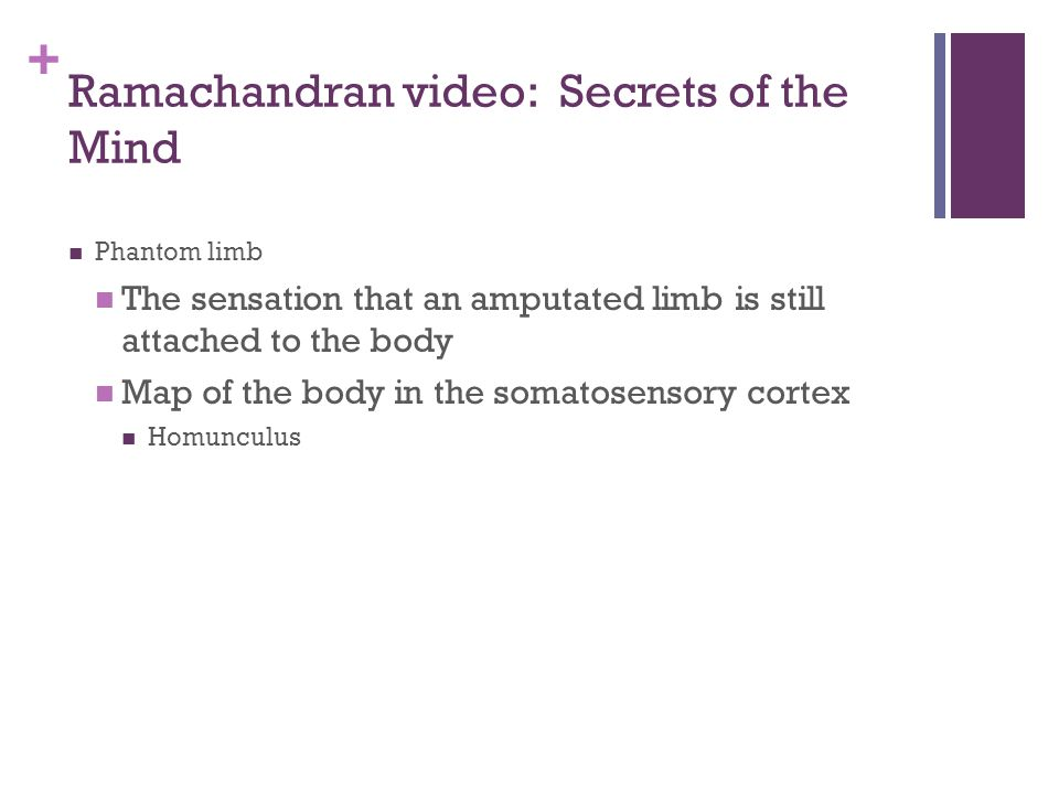 + Ramachandran video: Secrets of the Mind Phantom limb The sensation that an amputated limb is still attached to the body Map of the body in the somatosensory cortex Homunculus