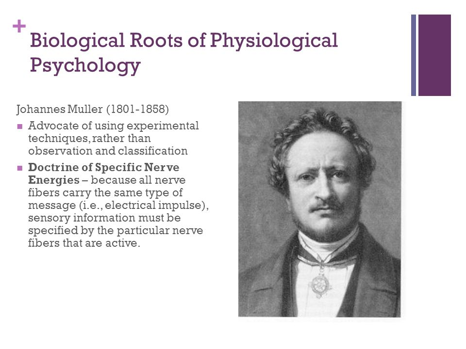 + Biological Roots of Physiological Psychology Johannes Muller (1801-1858) Advocate of using experimental techniques, rather than observation and classification Doctrine of Specific Nerve Energies – because all nerve fibers carry the same type of message (i.e., electrical impulse), sensory information must be specified by the particular nerve fibers that are active.