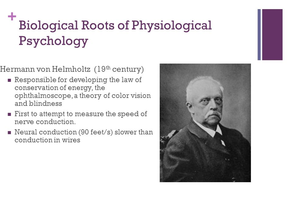 + Biological Roots of Physiological Psychology Hermann von Helmholtz (19 th century) Responsible for developing the law of conservation of energy, the ophthalmoscope, a theory of color vision and blindness First to attempt to measure the speed of nerve conduction.