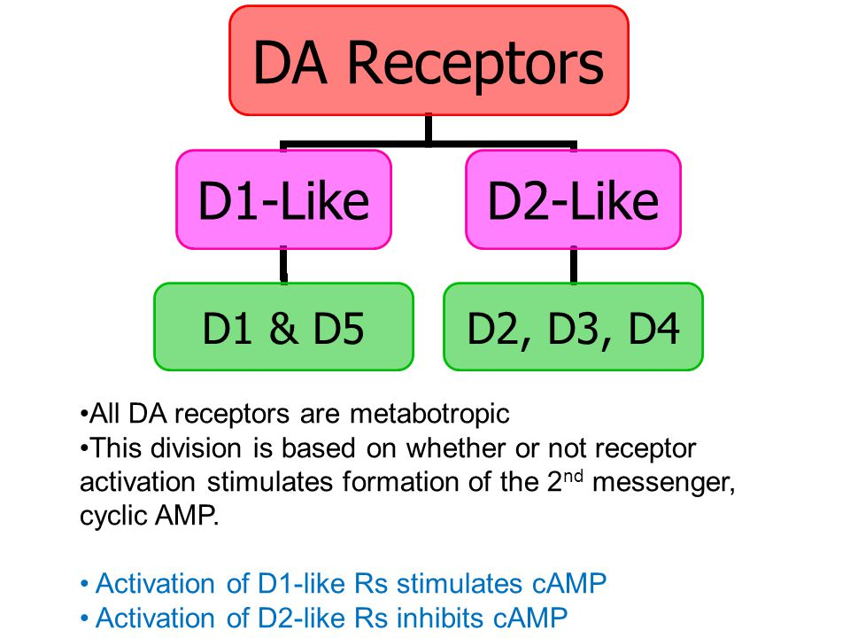 DA Receptors D1-Like D1 & D5 D2-Like D2, D3, D4 All DA receptors are metabotropic This division is based on whether or not receptor activation stimulates formation of the 2 nd messenger, cyclic AMP.