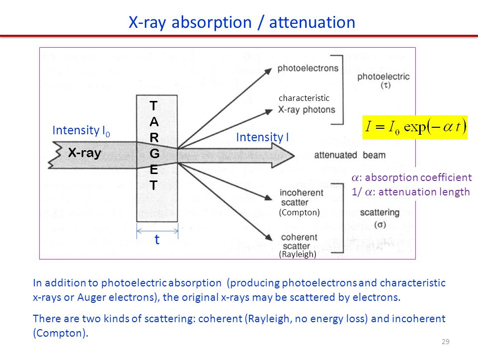 In addition to photoelectric absorption (producing photoelectrons and characteristic x-rays or Auger electrons), the original x-rays may be scattered by electrons.